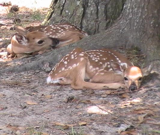 Can Deer Antlers Make Dogs Sick